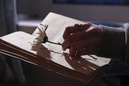 person holding white daisy flower on top of book