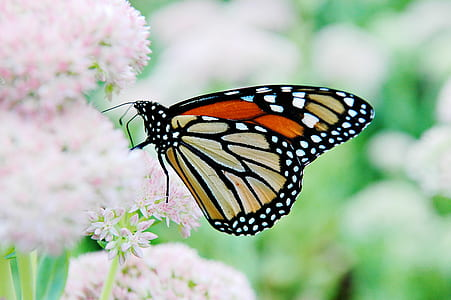 macro shot photography of brown and black monarch butterfly