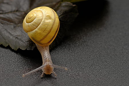 photo of snail on black surface