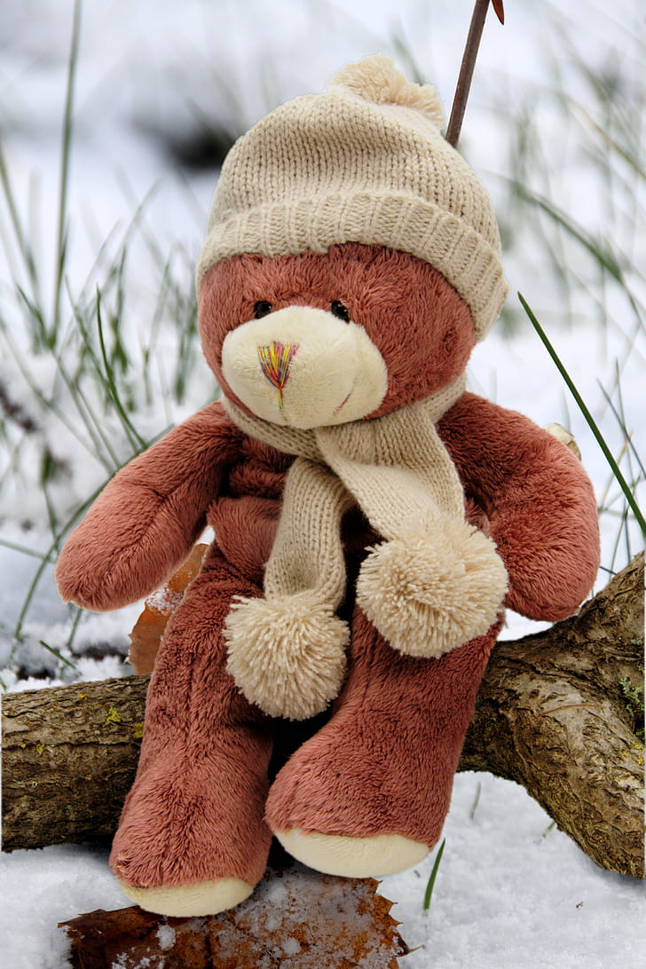 Royalty free photo brown bear plush toy on tree branch pickpik brown bear plush toy on tree branch thecheapjerseys Gallery
