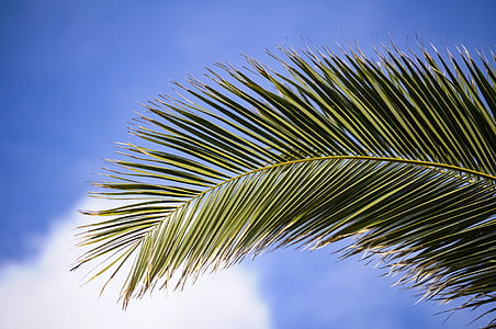 low angle photography of coconut tree leaf under clear sky