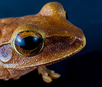 selective focus photography of brown frog