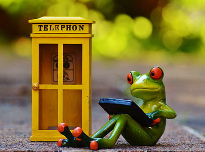 red eyed tree frog sitting using smartphone near yellow wooden telephon booth