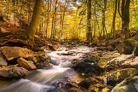 water falls near on green trees