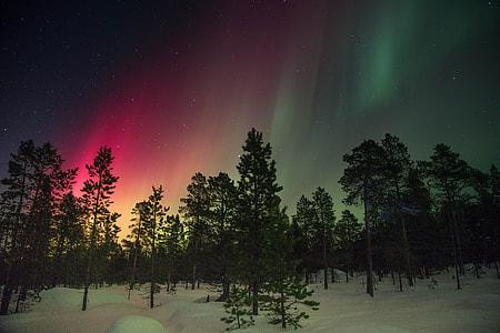 aurora sky under night