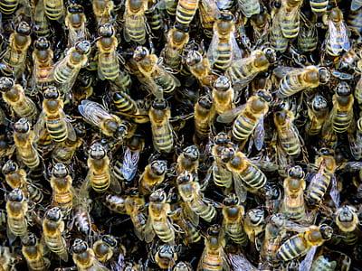 beehives photo