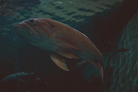orange fish swimming on water
