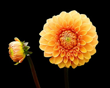 macro photography of yellow and orange flower