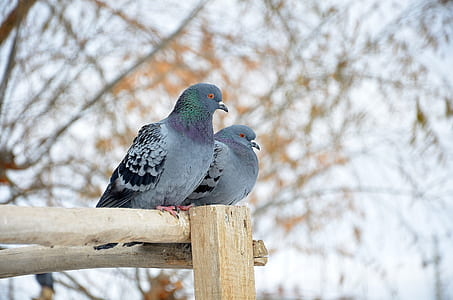two rock doves on brown wooden stand