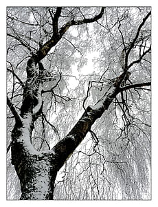 low angle photo of tree covered with snow