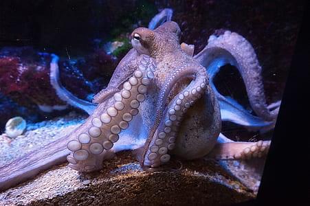 closeup photo of brown octopus