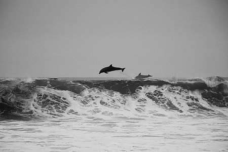 dolphin jumping on the ocean during day time
