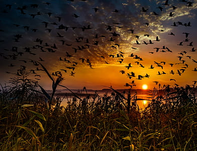 silhouette of flock of birds flying above body of water during golden hour