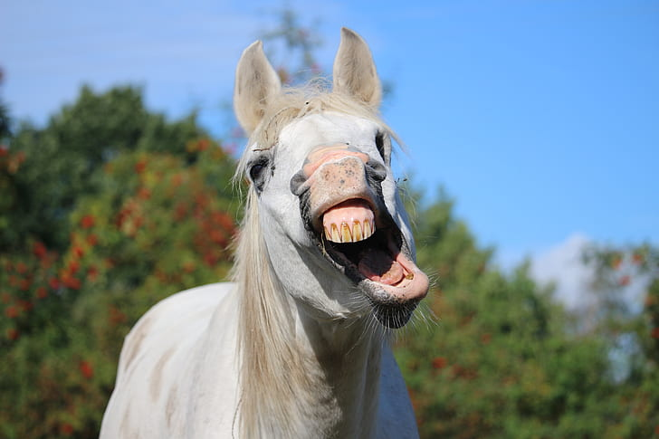 macro photgrapy of white horse