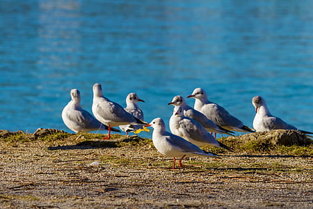 flock of white seagulls on rock surface