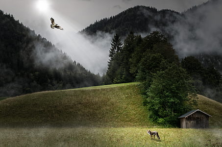 brown fox standing on grass facing brown eagle on sky with light ray