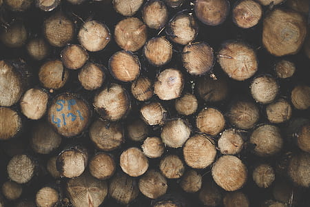Shallow Focus Photography of Brown Tree Logs