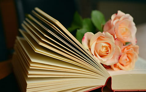 three pink Rose flowers on book