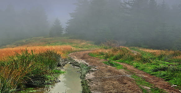 photo of pathway surrounded by grass