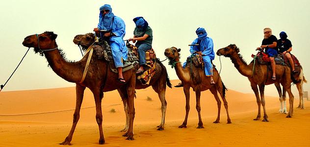 people riding camel during daytime