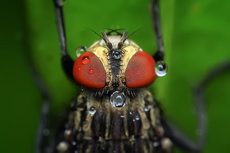 close-up photography of robberfly