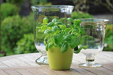 photo of green leaf plant in vase