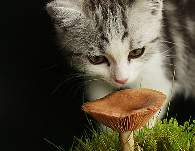 white and gray kitten in front of brown fungus