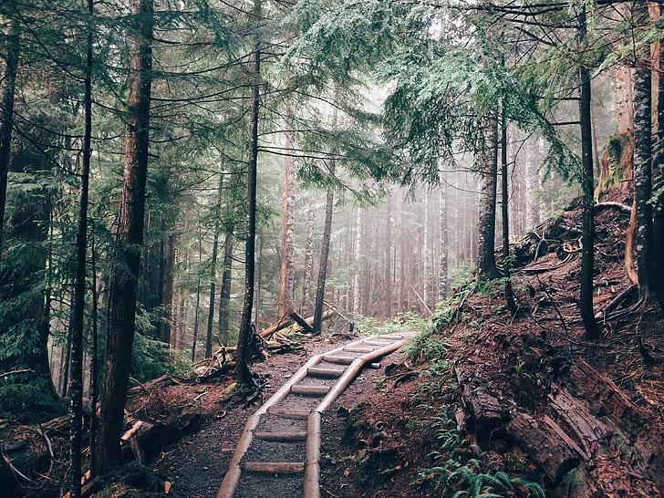 Pathway Between Green Pine Trees