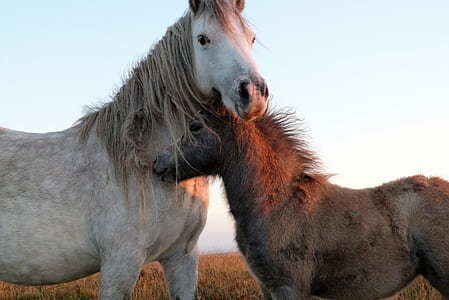 selective focus photography of two white and black horses on grass field