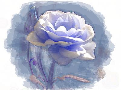 white rose illustration