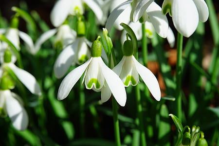 depth of field photograph of white petaled flower