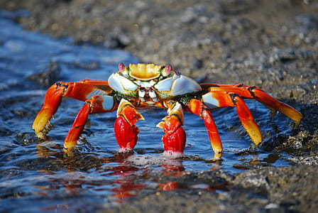 orange crab on seashore during daytime