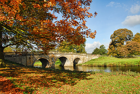 landscape photo of bridge and trees during daytime
