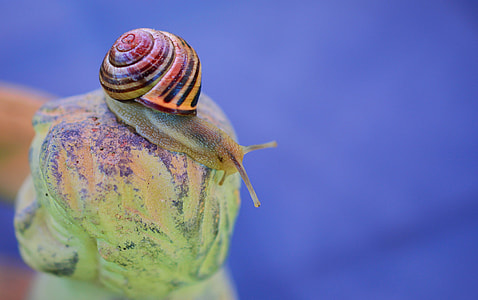 red and yellow snail in focus photography