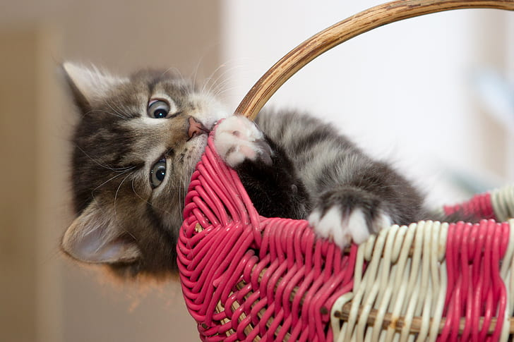 gray cat in red and white woven basket