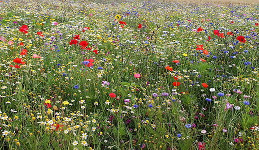 red and blue flower field