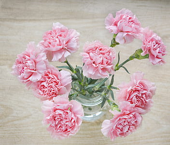 pink carnation flowers in clear glass vase