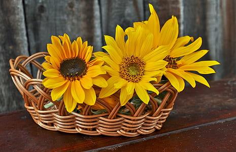 yellow sunflowers on brown wicker basket