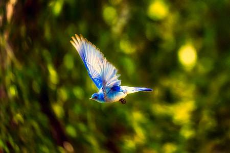 blue and white bird flying near tree