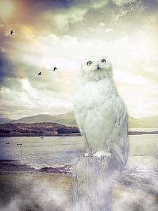 white owl standing on tree log during daytime