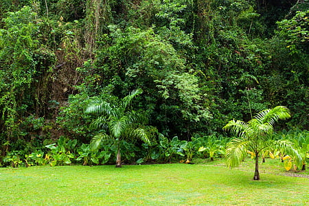 green plants and trees on forest