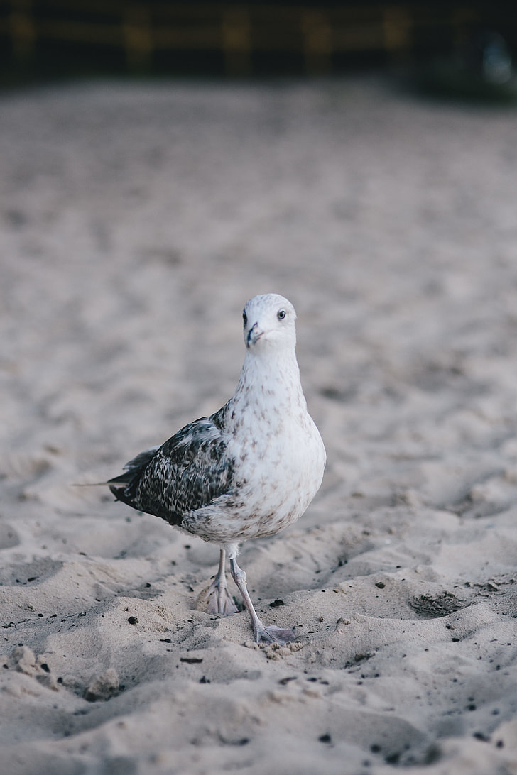 White seagull on the beach