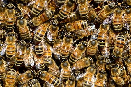 flight of honeybees