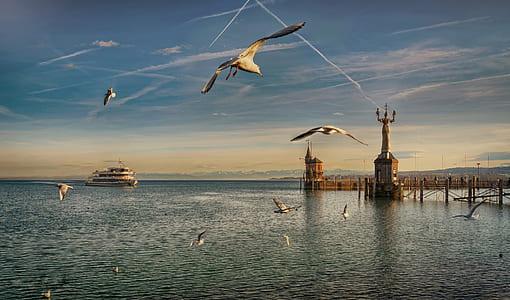 flock of gulls near ship during daytime