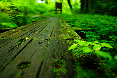 brown wooden plank surrounded by green leaves