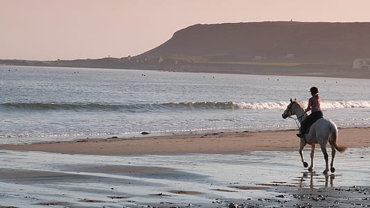 person riding white horse beside beach