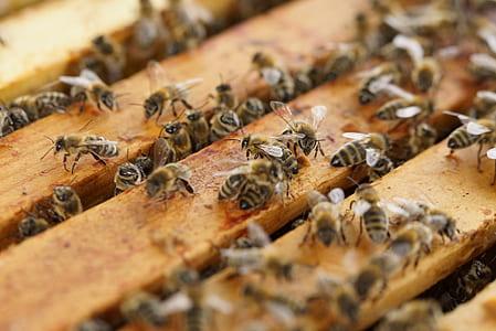 honeybee farm