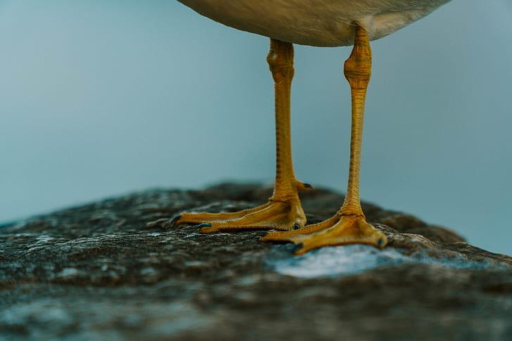 standing bird with brown legs