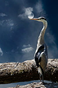 photography of white and black bird on brown branch