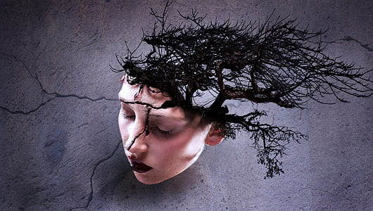 photo of woman with bare tree